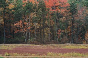 2003-33-013.jpg